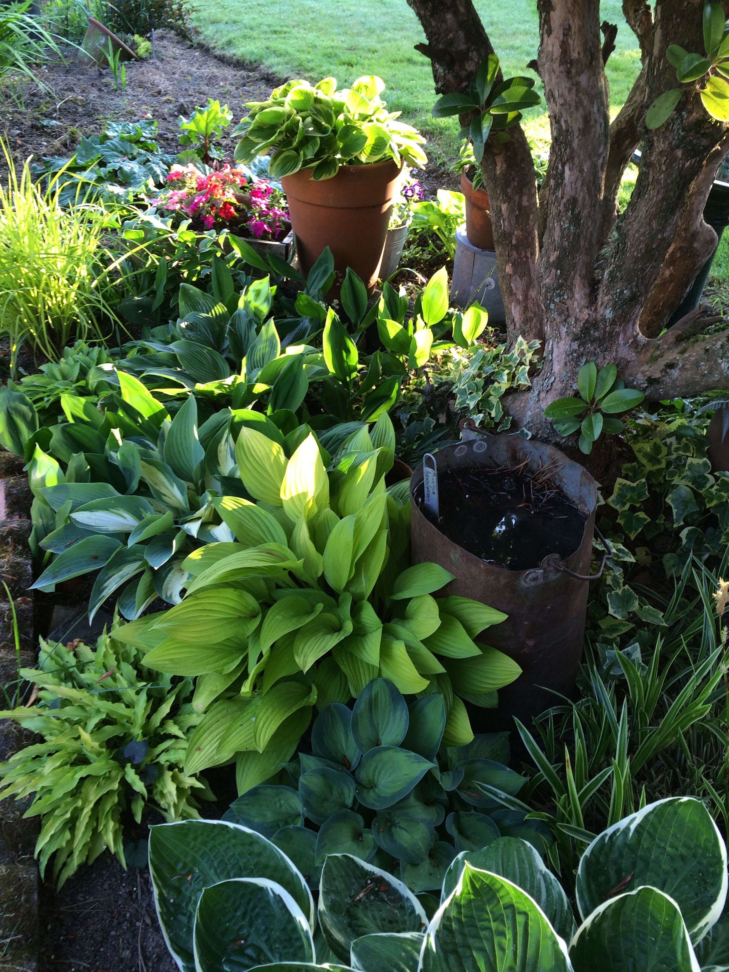 Growing Hosta From Seed And Book Review The Triumph Of Seeds By